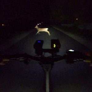 I Almost Hit a Deer! Kaabo Mantis Midnight Electric Scooter Ride